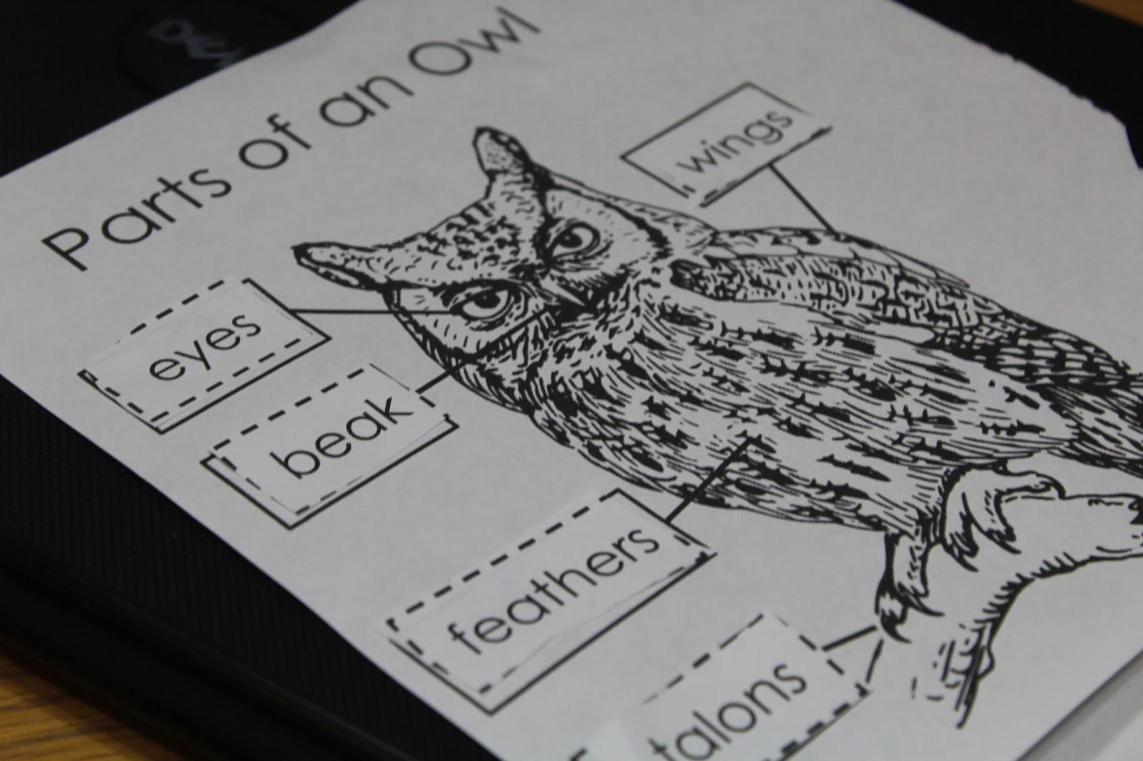 Mom S Heart Fiar Owl Moon