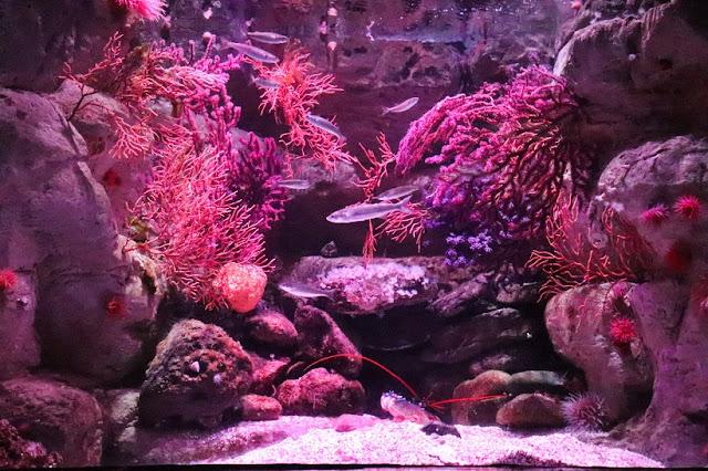 cineaqua-aquarium-paris