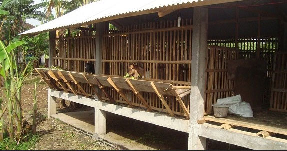 Rumah Ternak: Panduan Memilih Jenis Kandang Kambing