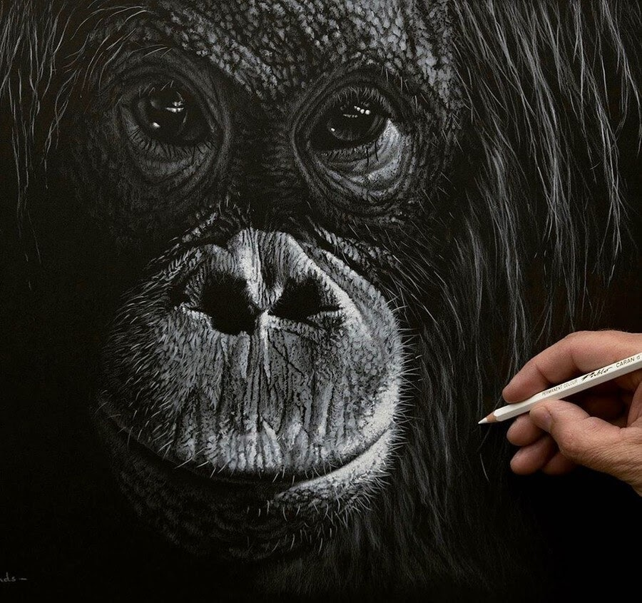 06-Orangutan-Richard-Symonds-www-designstack-co
