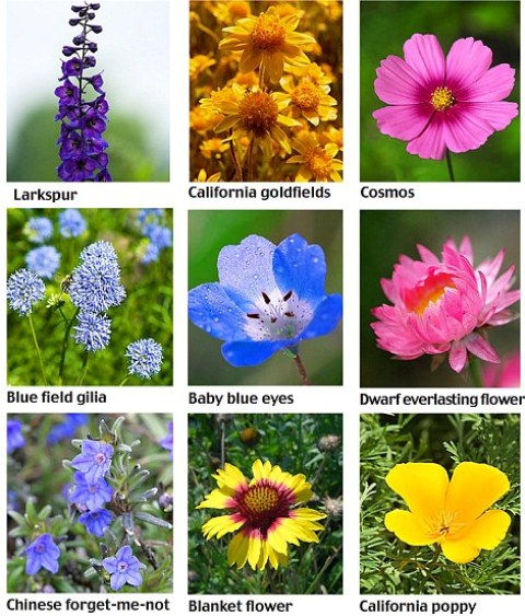 Names Of Different Flowers
