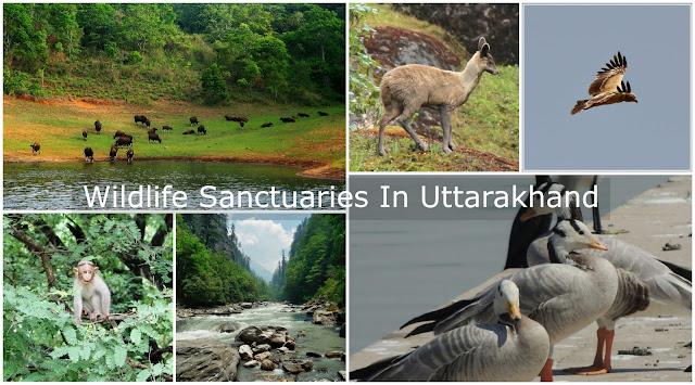 Wildlife Sanctuaries in Uttarakhand