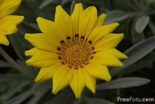 Iris (c) FreeFoto.com