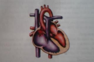 defek septum atrium sinus venosus