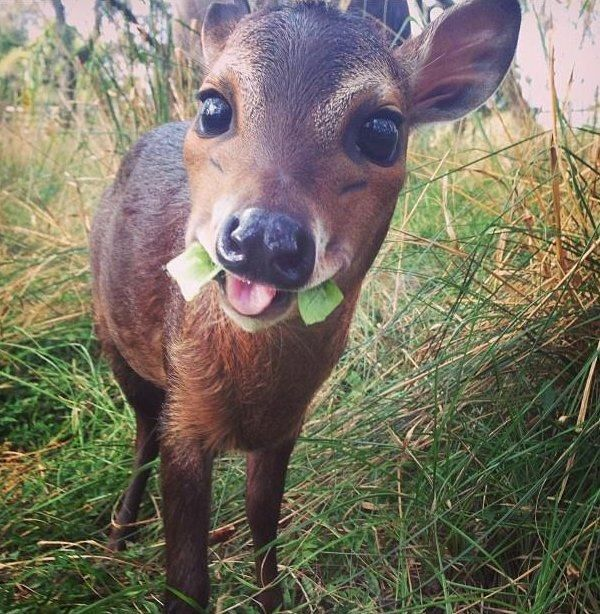 Funny animals of the week - 25 November 2016, cute animal images, best adorable animal photos