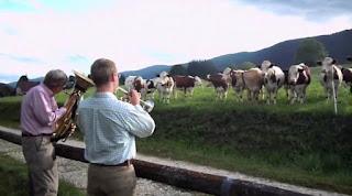 musik klasik dapat meningkatkan produksi susu sapi