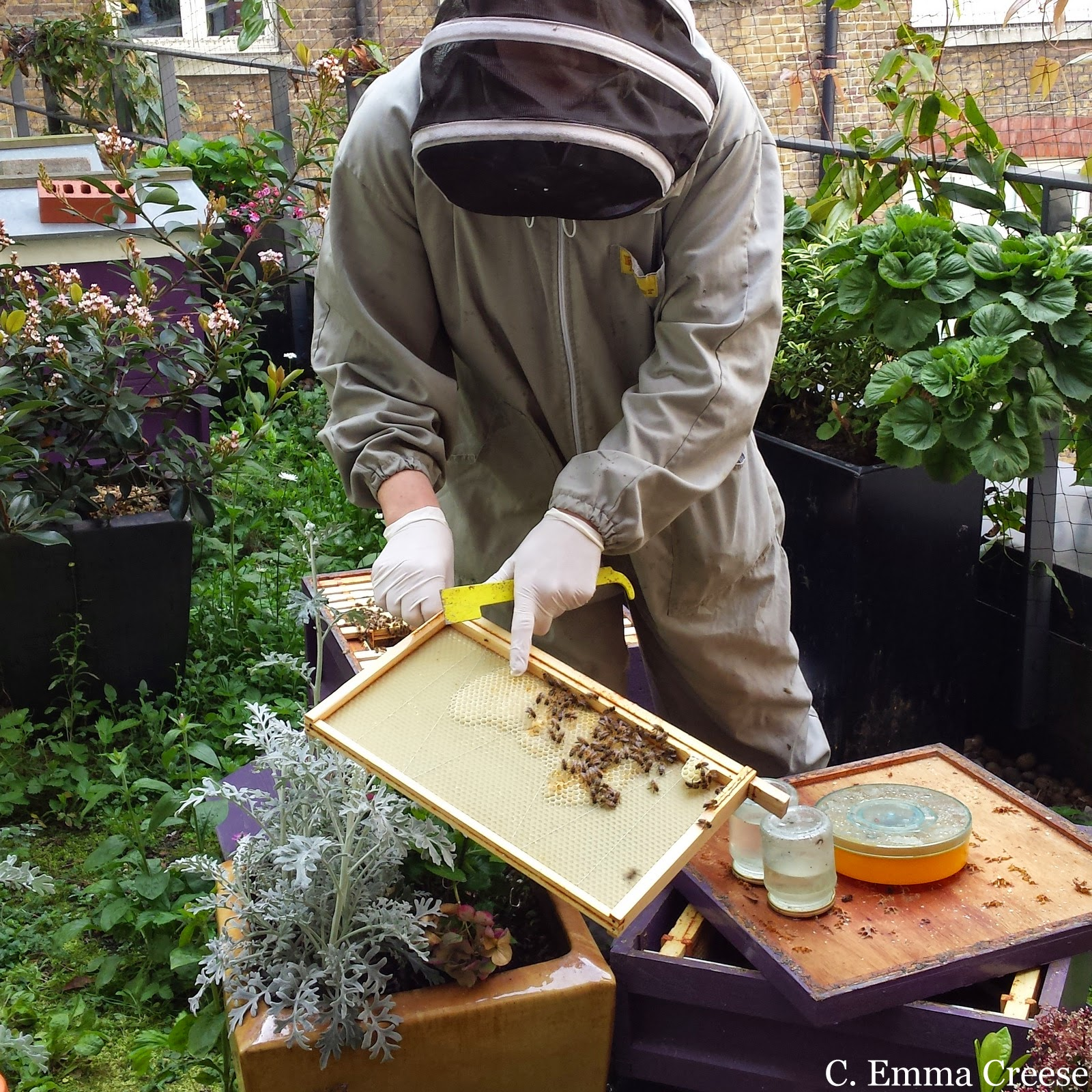 Beekeeping Course St Ermin's Hotel Westminster