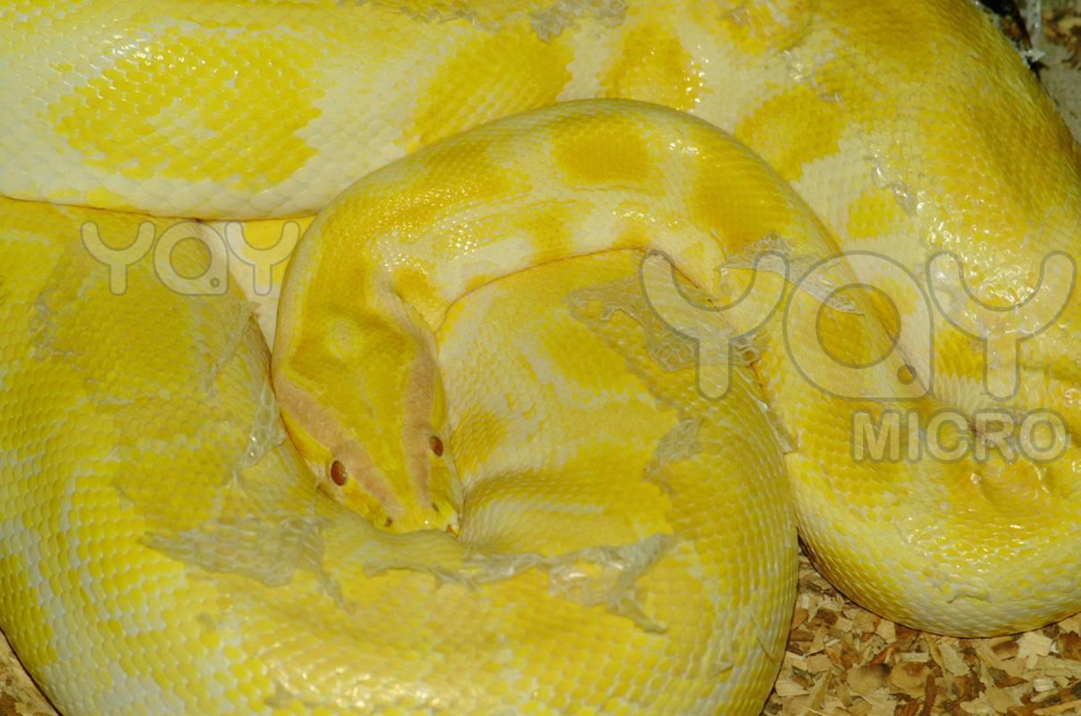 Cute 3d Flower Wallpaper Yellow Snake Hd Wallpaper Hd Wallpaper