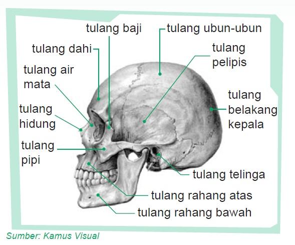 tula ng matanda Eksplinasyon ng tulang ang matanda at batang paruparo - 273973.