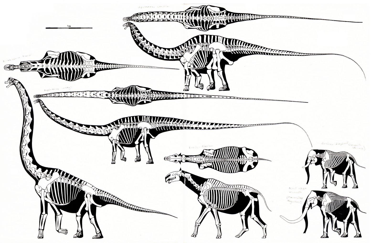 Sauropod Necks