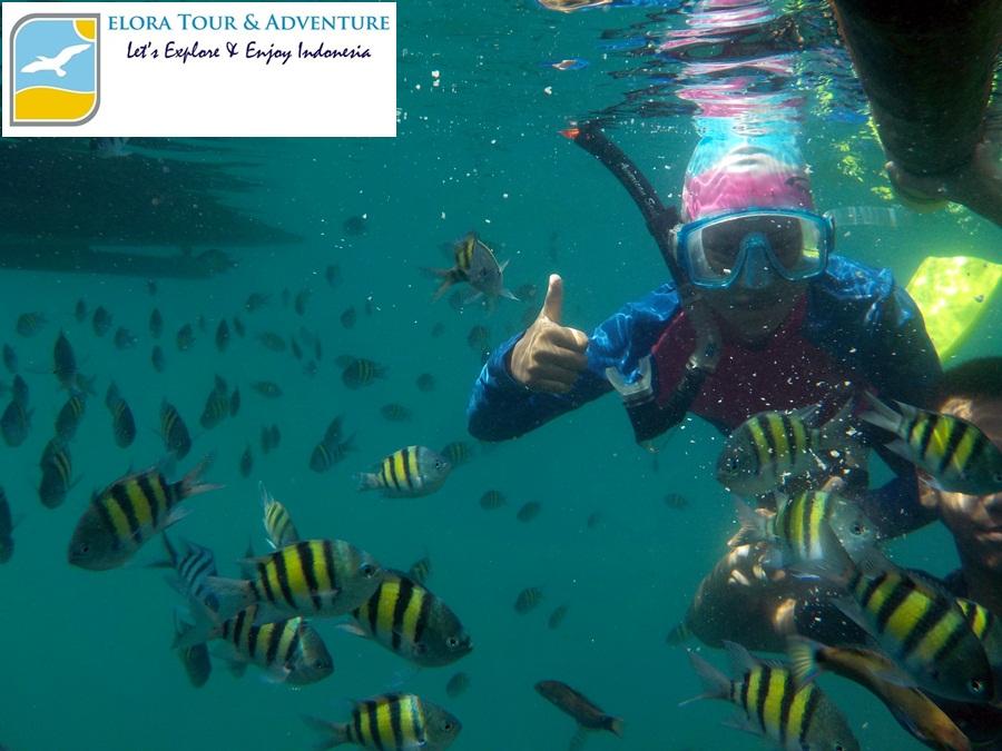 Snorkeling Seharian di Pahawang Kelagian Lunik