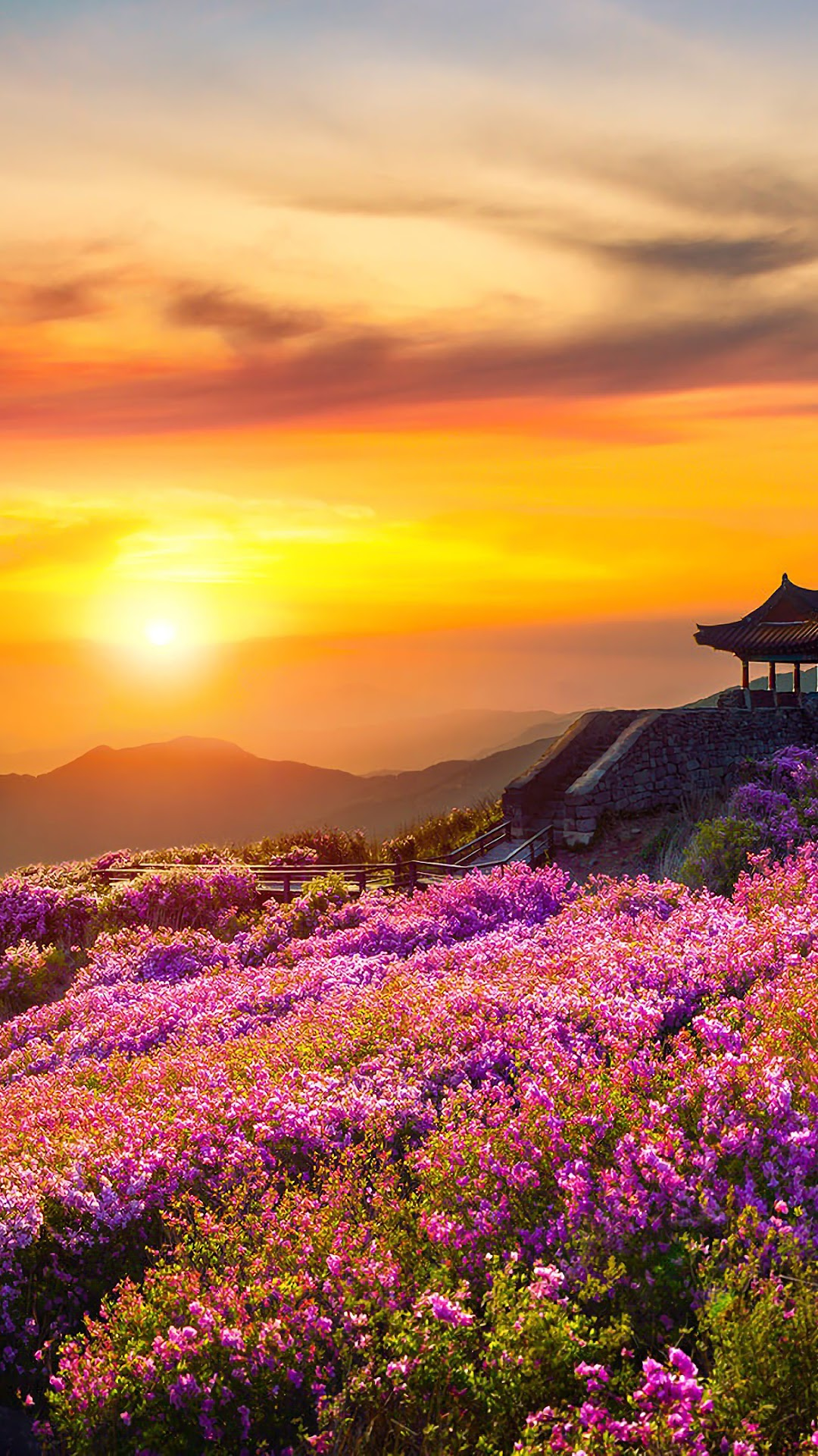 Flower Mountain Nature Landscape Sunset Scnery 4k Wallpaper 162