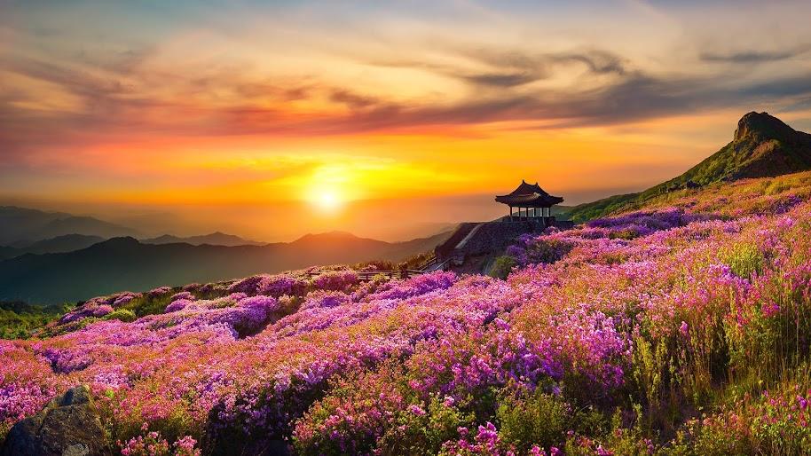 Flower Mountain Nature Landscape Sunset Scnery 4k Wallpaper 162