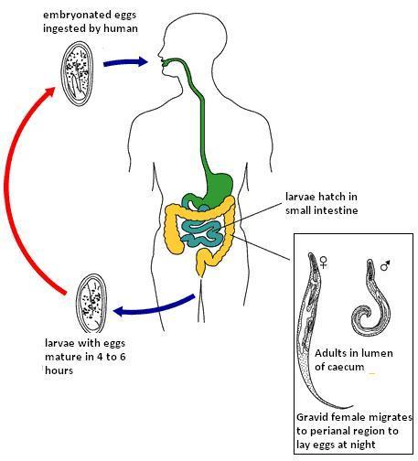 Szájüregi daganatok | ifalhu Papilloma a szájban kezelésére