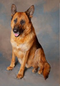 Donner GSD (formerly Thunder)