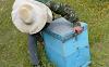 Πανεύκολη επιθεώρηση ενός μελισσιού - Για πολύ νέους μελισσοκόμους!