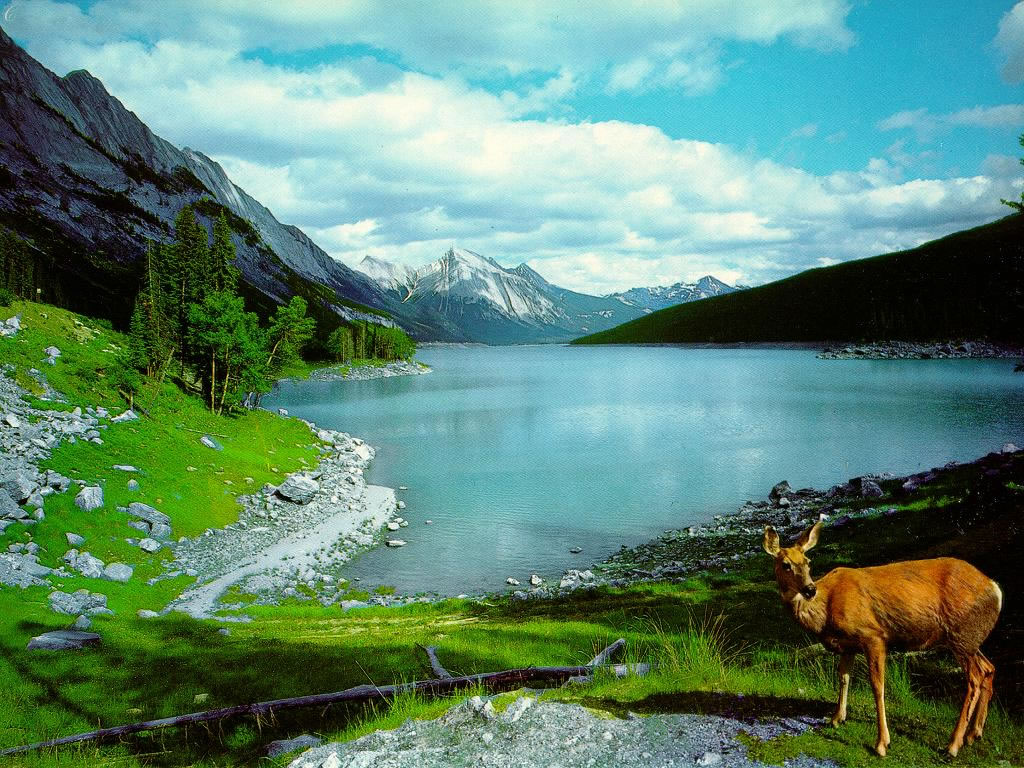 Golden Pictures: Nature wallpaper hd 1024x768