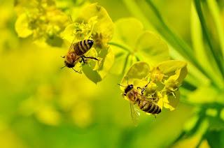 grosir madu di surabaya, harga madu hutan asli, jual madu hutan di surabaya, madu hutan, madu hutan asli, madu hutan surabaya, peternak lebah surabaya, toko madu hutan di surabaya