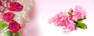 Gambar bunga mawar Untuk Cover  Facebook
