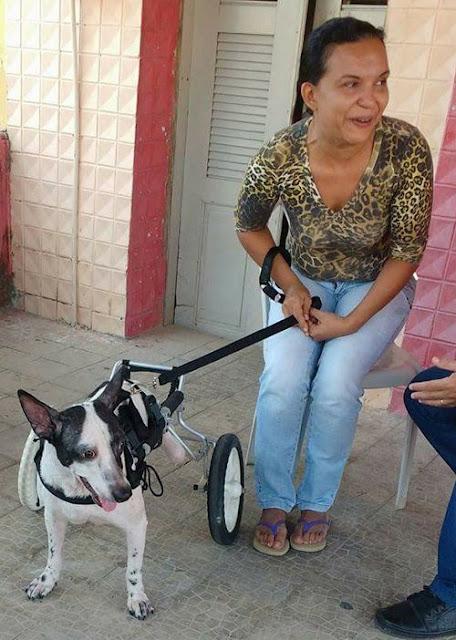 Cão ganha cadeira de rodas