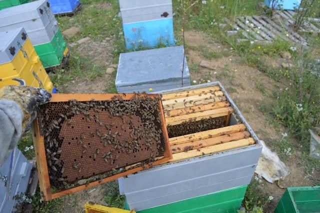 Τι κάνουμε για να πετύχουμε μεγάλη ανάπτυξη στα μελίσσια για περισσότερο μέλι στις νομές!