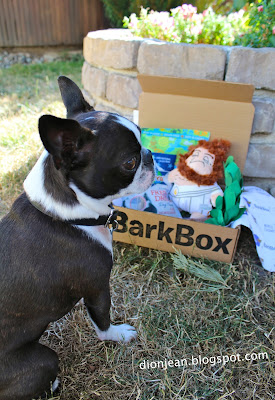 Sinead posing in front of her BarkBox