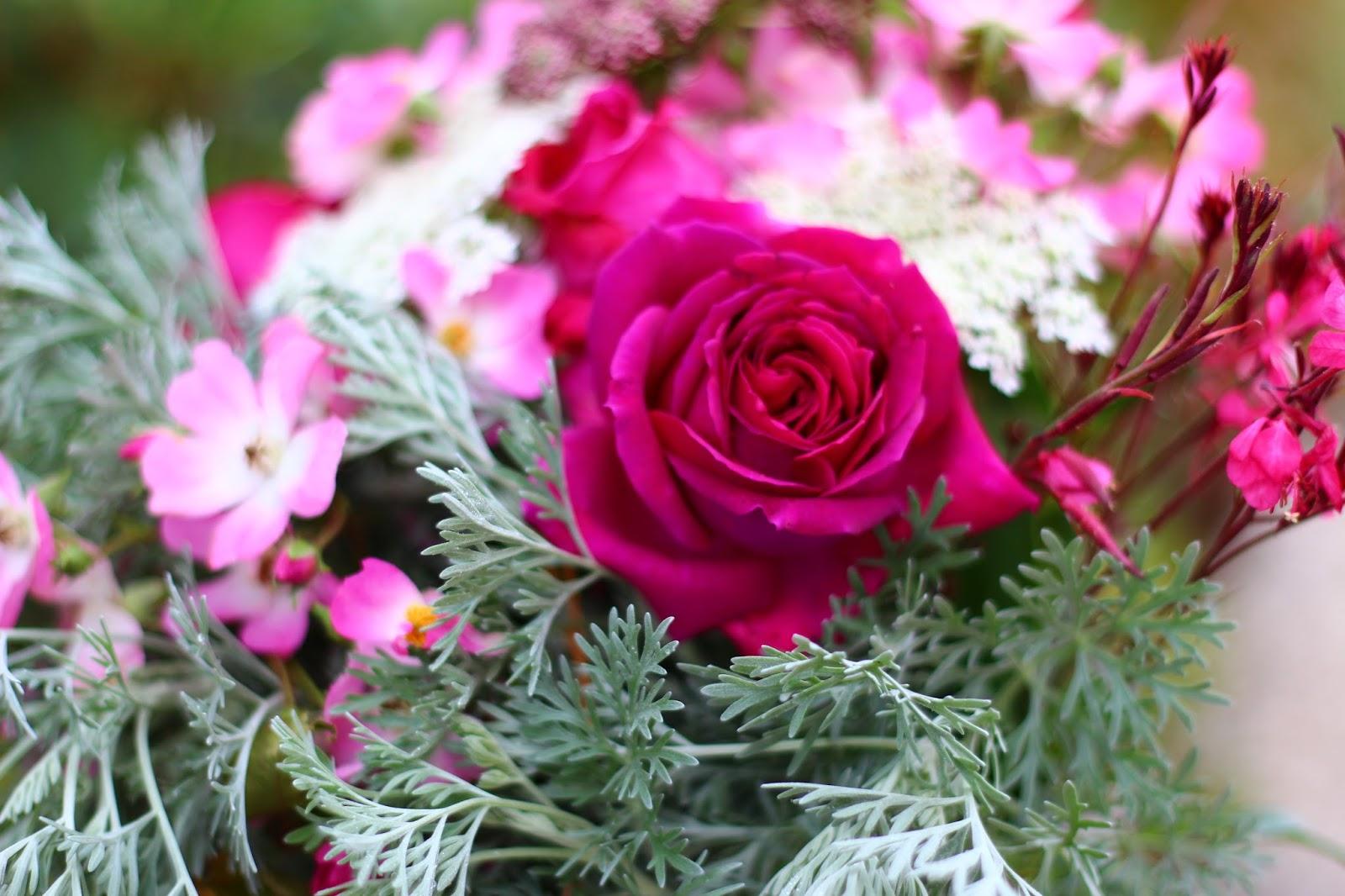 roses du jardin ch neland rosier imaginaire parfum. Black Bedroom Furniture Sets. Home Design Ideas