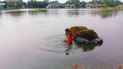 Manisan Rumput Laut Dari Kampung Sembilangan Babelan