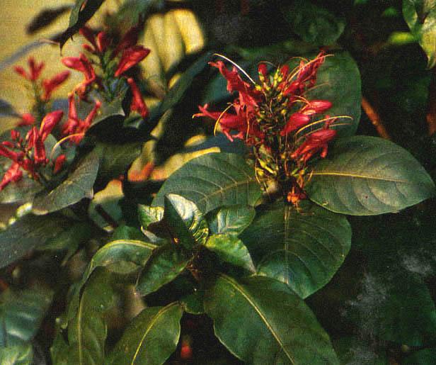 Obat Herbal Dan Jamu Tradisional Untuk Segala Macam