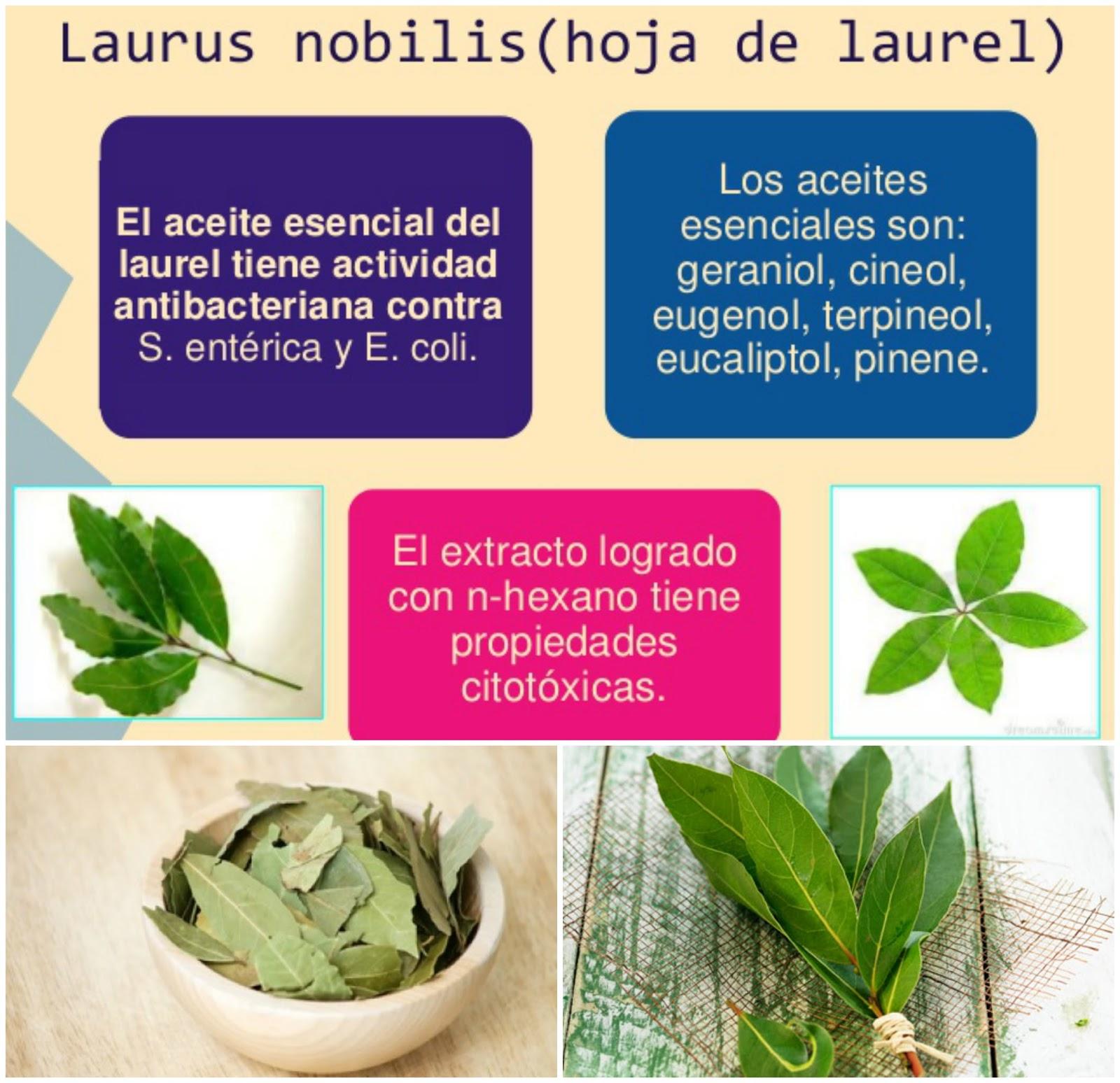 Liza hume mundo vegetal laurel for De donde se obtiene el marmol