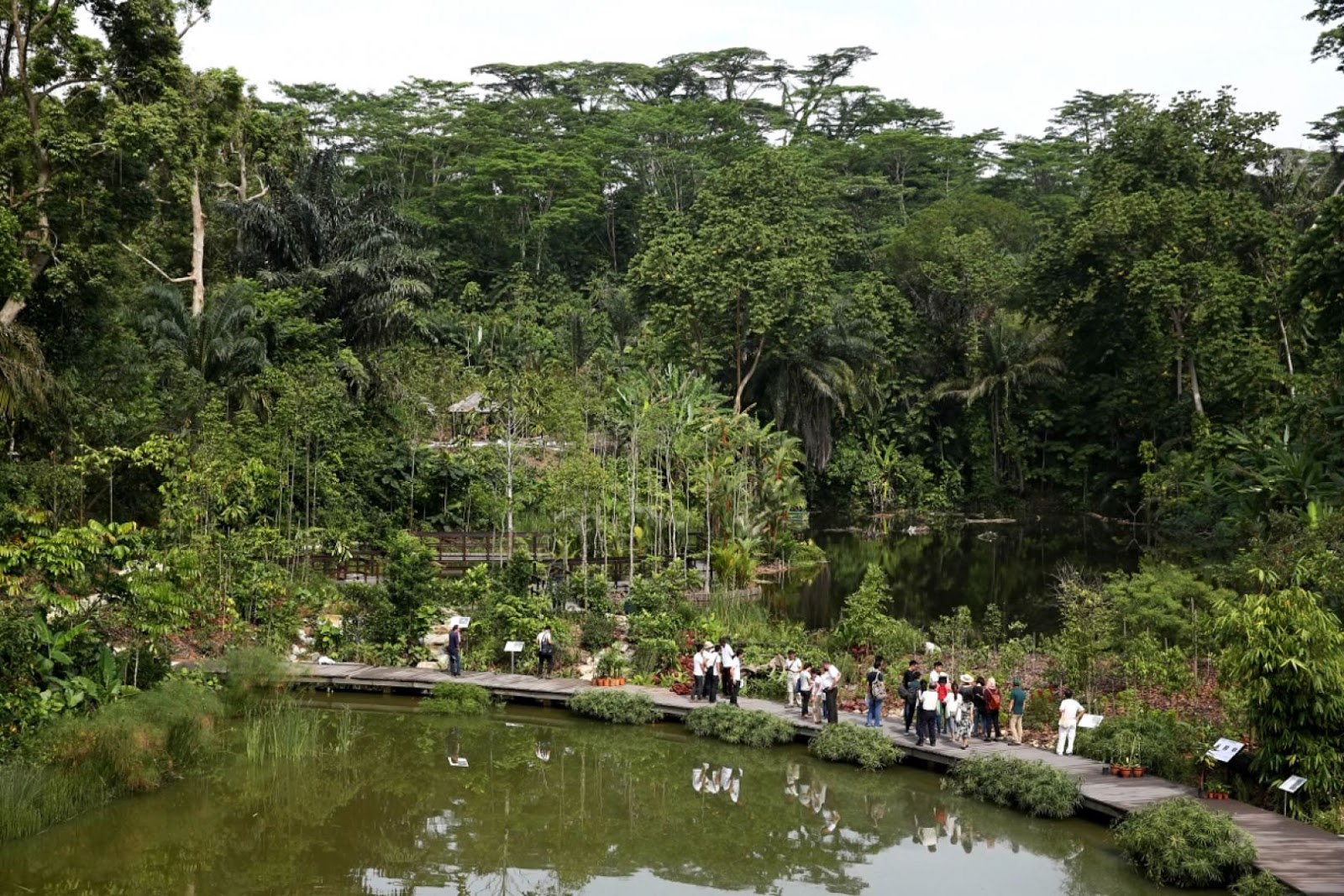 People tour the Botanists' Boardwalk at the Keppel Discovery Wetlands