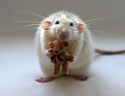 ratón con  oso de peluche