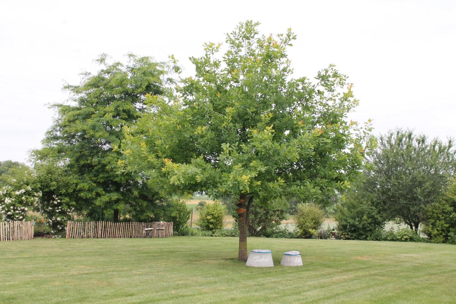 Mein Lieblingsbaum Im Garten