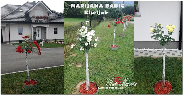 Stablačice Ruže , BiH, Kiseljak