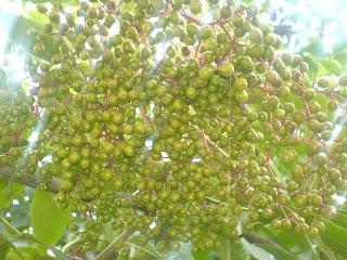 Fructele socului reteta,