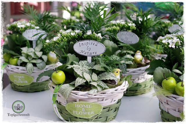 Gartenblog Topfgartenwelt Eröffnung Gartencenter Dehner Salzburg: fertige Gestecke in grün und weiß
