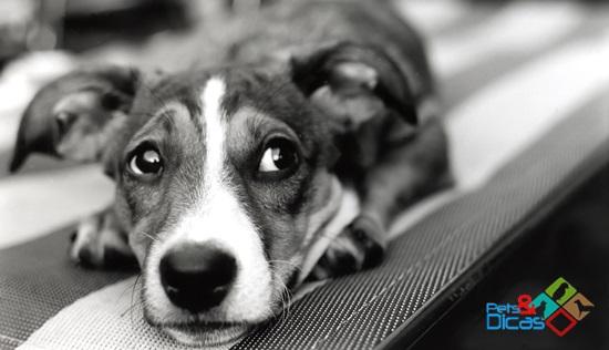 Shutterstock cão sozinho