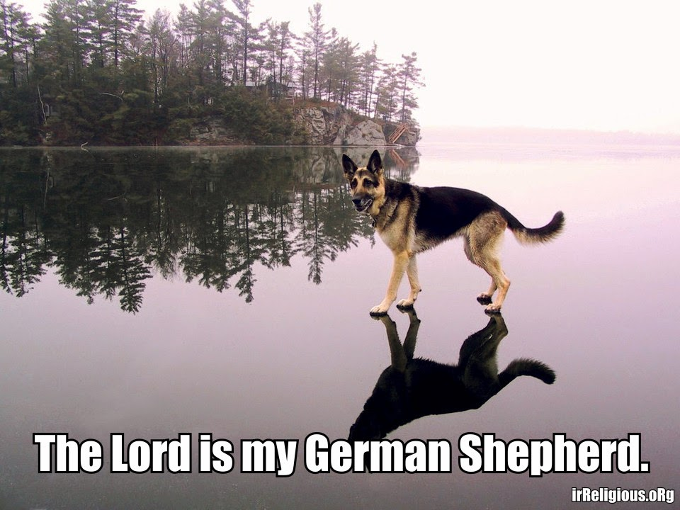 Funny Lord German Shepherd - dog walking on water ice