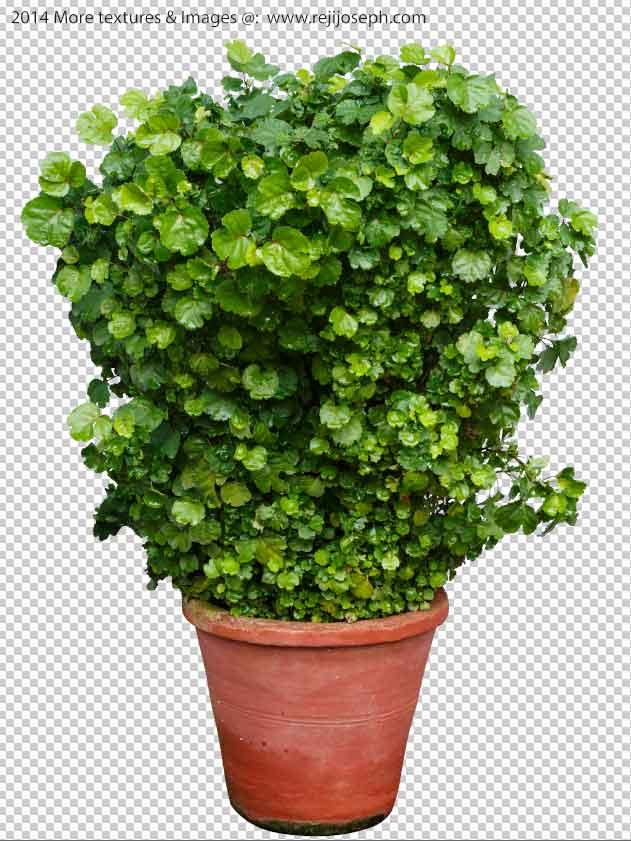PNG Garden Plant Texture 00001