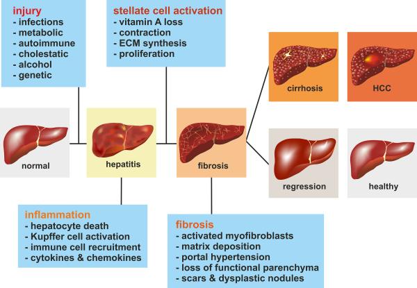 Cat Fatty Liver Natural Treatment