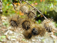 Plants With Burrs