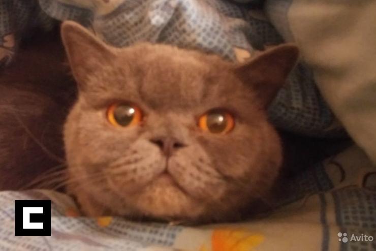 """Tipo vende gata que dizque cura la """"resaca"""" y evita los """"cuernos"""" por US$230,000 en Rusia"""
