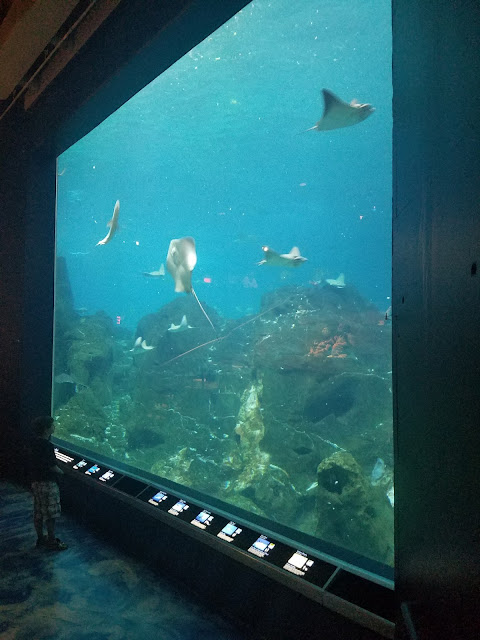 The Busy Giffs Pennsylvania 2016 Adventure Aquarium