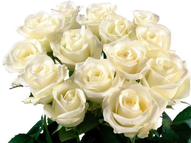 bó hoa hồng trắng đẹp nhất 2017 9