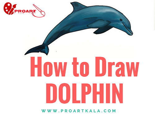 How to Draw Dolphin