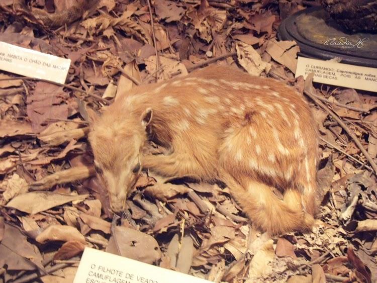museu bosque jequitibas