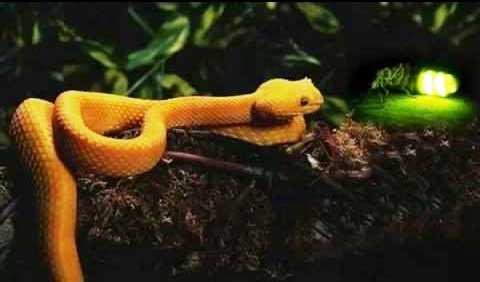 La luciérnaga y la serpiente