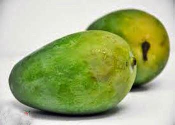 Manfaat buah mangga yang begitu banyaknya menciptakan buah yang satu ini layak disebut sebagai Yuk Konsumsi Mangga, Rajanya Semua Buah