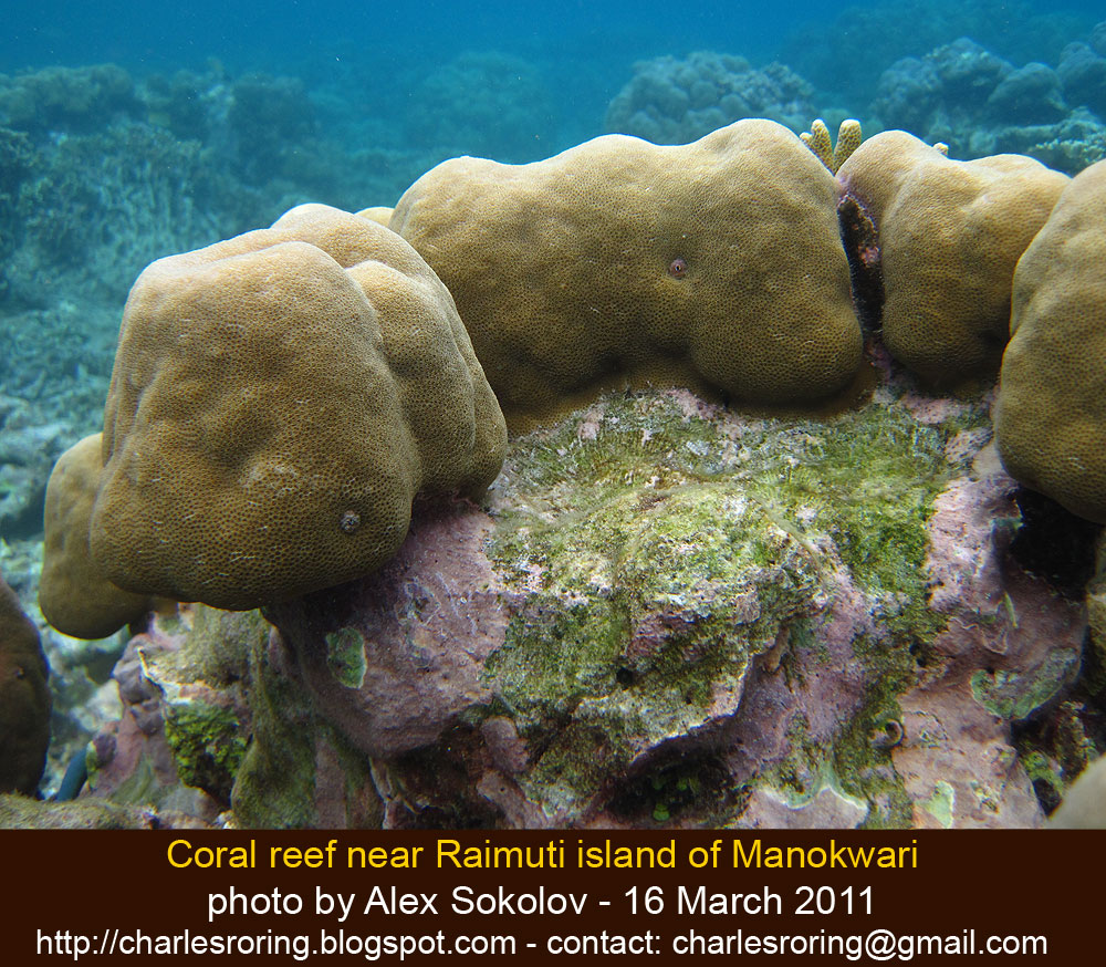 Ecotour Adventure: Snorkeling And Coral Reef Preservation