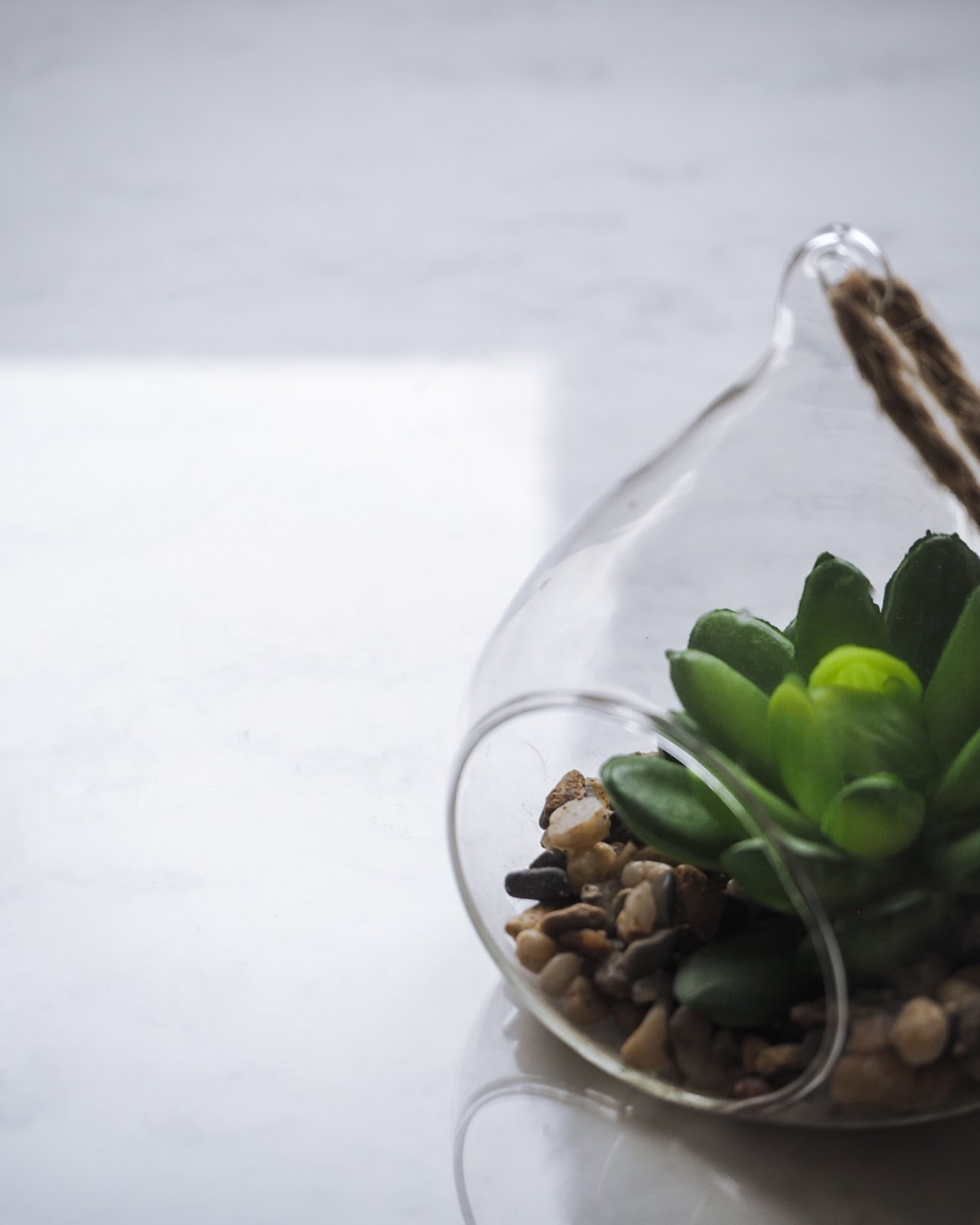 Small Succulent Plant